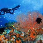 corals-in-cenderawasih-bay