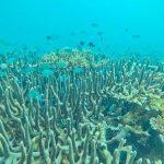 Pantai-Dato-Majene-Sulawesi-Barat