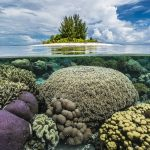 Coral Reef around Island, Raja Ampat